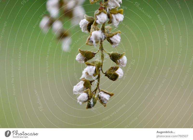 im Märchenwald... Natur grün weiß Pflanze Sommer Wald Frühling Zufriedenheit retro einzigartig Unendlichkeit Zusammenhalt friedlich Wildpflanze