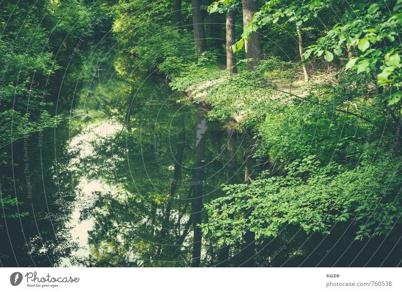Kanal steht auf Grün Natur Pflanze grün Wasser Baum Erholung ruhig Landschaft Umwelt See Stimmung Park Freizeit & Hobby Wachstum Idylle Zufriedenheit