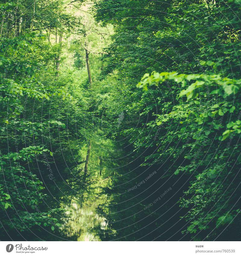 Alles im grünen Bereich. Umwelt Natur Landschaft Pflanze Urelemente Wasser Klima Baum Park Flussufer Moor Sumpf Teich See Oase Wachstum nachhaltig Stimmung