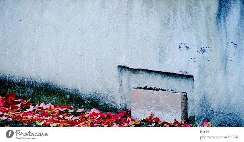 die ASCHE meiner MUTTER Hintertür Urne Ehre Mitte Roter Teppich abwärts Haus Wand Blatt Fenster Herbst Laune Stimmung Grab Herbstlaub ruhig Trauer Frieden