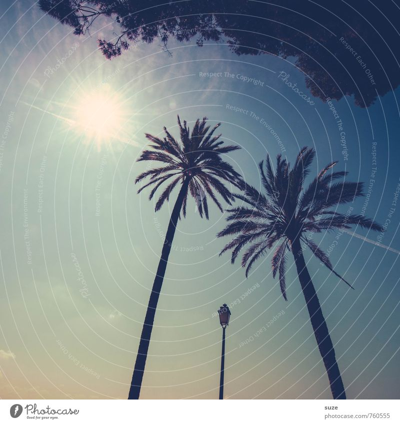 High Society Himmel Natur Ferien & Urlaub & Reisen blau Sommer Strand Wärme Reisefotografie Stil Freiheit Zusammensein Lifestyle Tourismus Insel paarweise