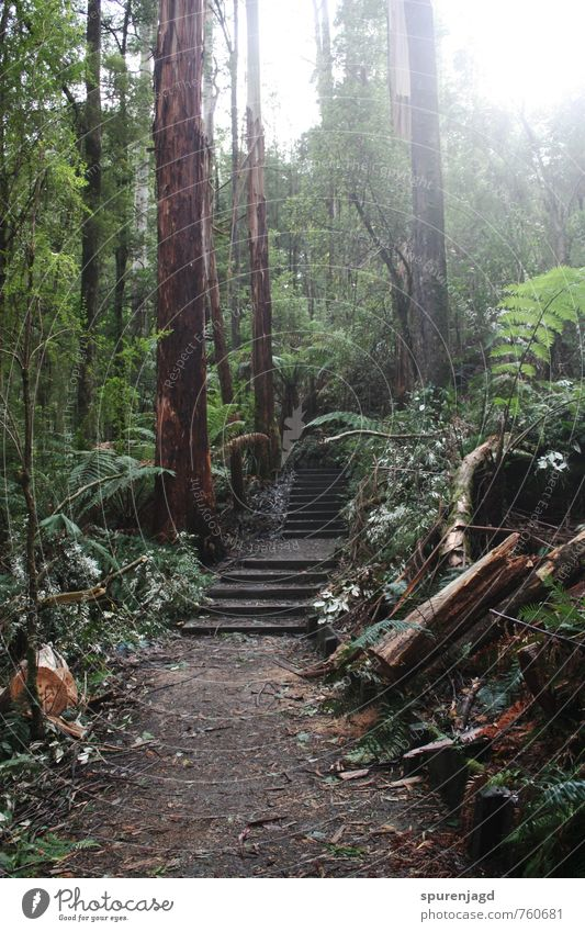 Walk in the Woods Natur grün Pflanze Baum Wald Bewegung braun Sträucher authentisch wandern Urwald Farn