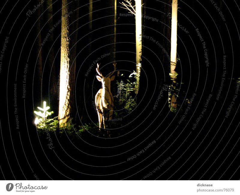zum weißen hirschen... Baum ruhig Wald entdecken Nacht Überraschung Aussehen Vorsicht Relief majestätisch Samstag