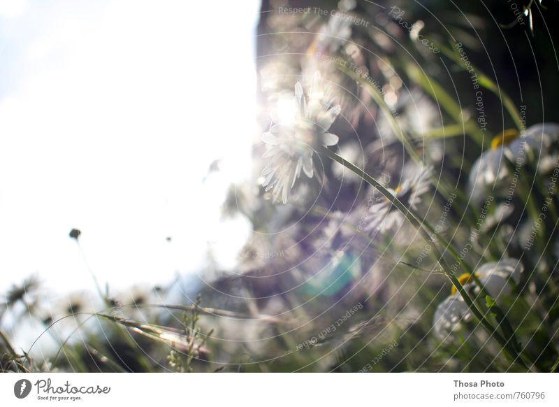 vom sehen und schweigen Umwelt Natur Luft Sonnenlicht Schönes Wetter Pflanze Blume Gras Blatt glänzend saftig wild mehrfarbig grün Landschaft Landleben Insekt