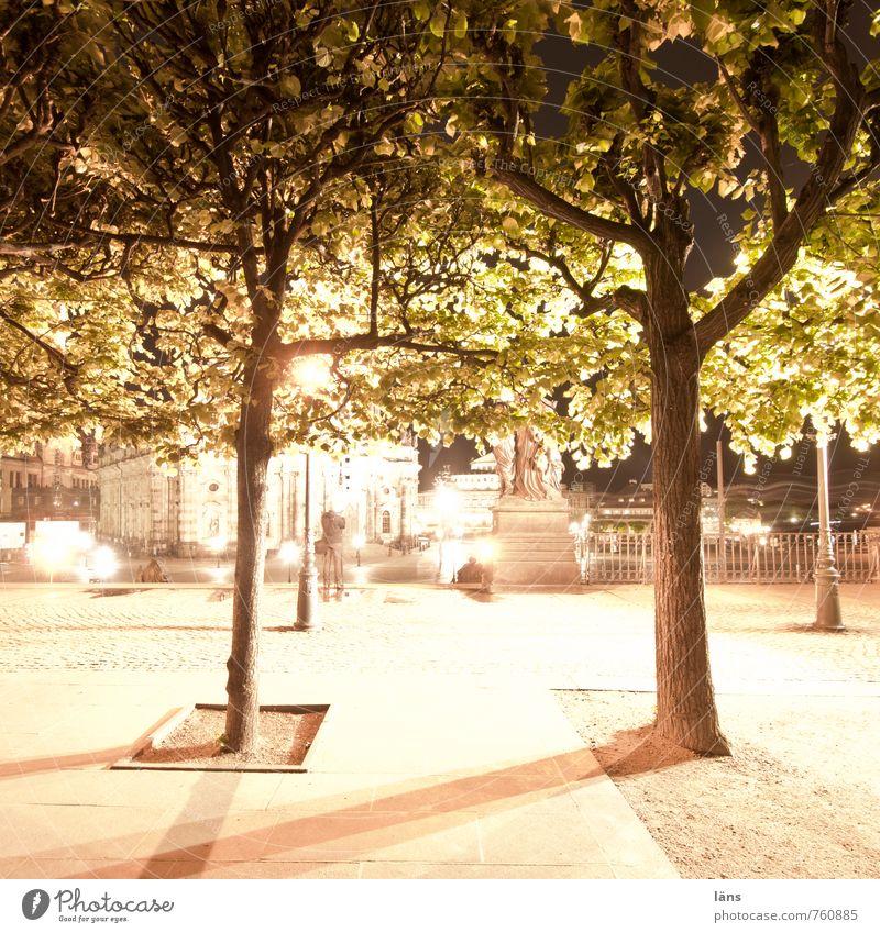 Nachts im Park Licht Baum Dresden Brühlsche Terrasse