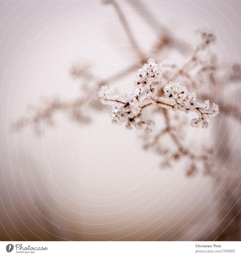 Frost Natur schön weiß Pflanze Erholung schwarz Winter Umwelt Schnee außergewöhnlich braun Stimmung Eis Sträucher ästhetisch Schönes Wetter
