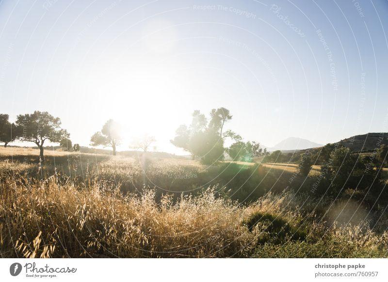 Massara Ebene / Kreta Natur Ferien & Urlaub & Reisen Sommer Sonne Baum Landschaft Ferne Umwelt Berge u. Gebirge Wärme Gras Tourismus Schönes Wetter