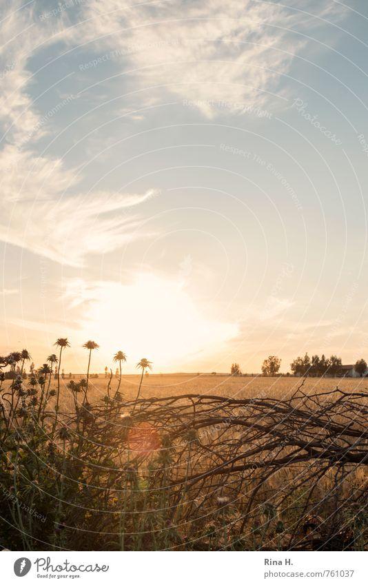 Spät III Umwelt Natur Landschaft Himmel Wolken Horizont Schönes Wetter Sträucher Feld gelb Lebensfreude Distel Zweig Farbfoto Menschenleer Sonnenaufgang