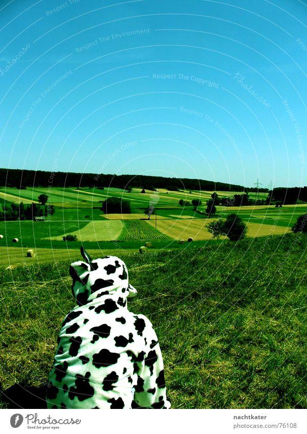 krüppelkuh aus dreistetten Landschaft Feld