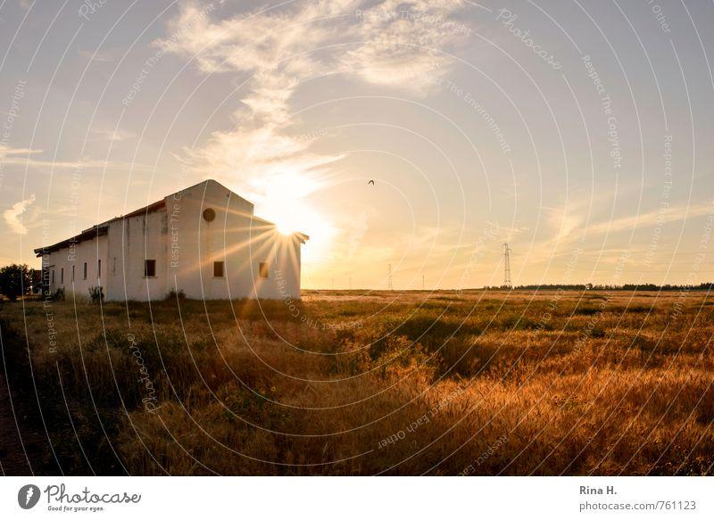 Spät II Landwirtschaft Forstwirtschaft Umwelt Natur Landschaft Himmel Horizont Frühling Sommer Schönes Wetter Feld Gebäude leuchten Lebensfreude Strommast