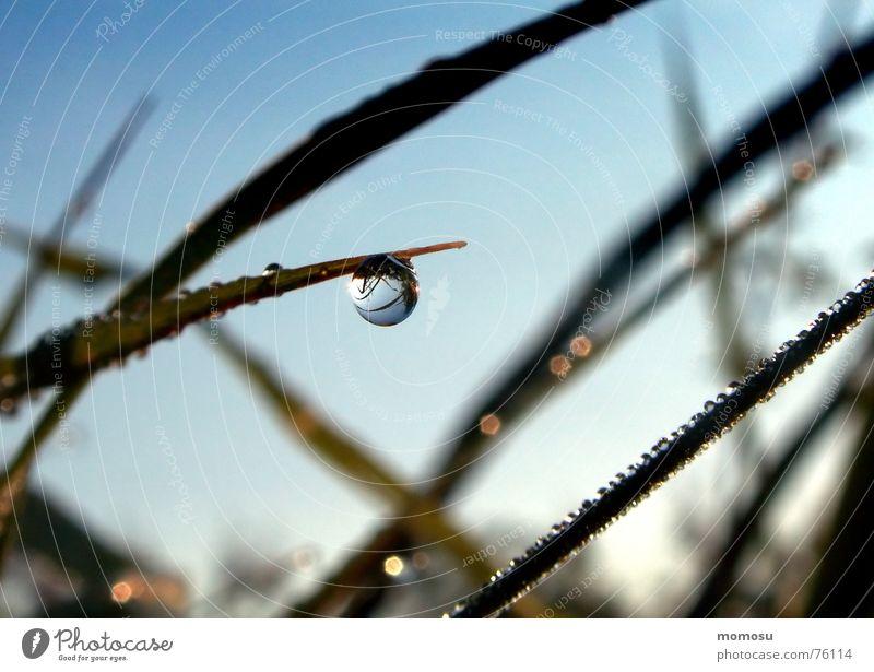 little world Gras Wiese Reflexion & Spiegelung nass Wassertropfen Seil Himmel Makroaufnahme glänzend Natur