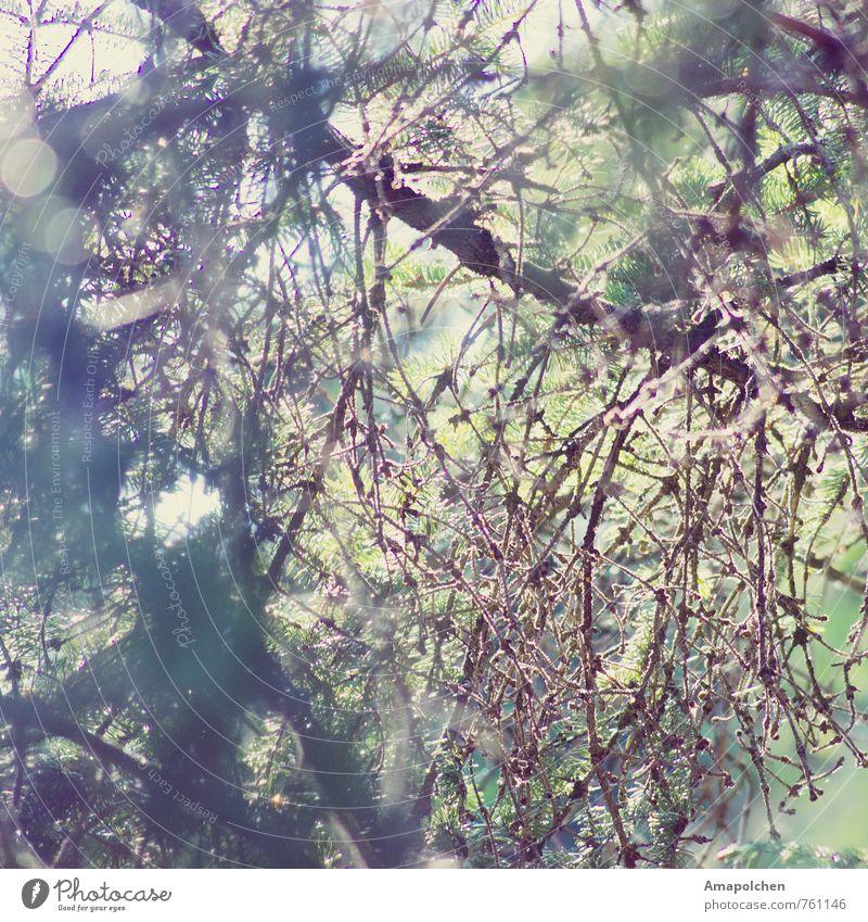 ::14-11:: Natur Ferien & Urlaub & Reisen Sommer Baum Erholung Landschaft ruhig Wald Umwelt Berge u. Gebirge Gesundheitswesen Freizeit & Hobby Zufriedenheit