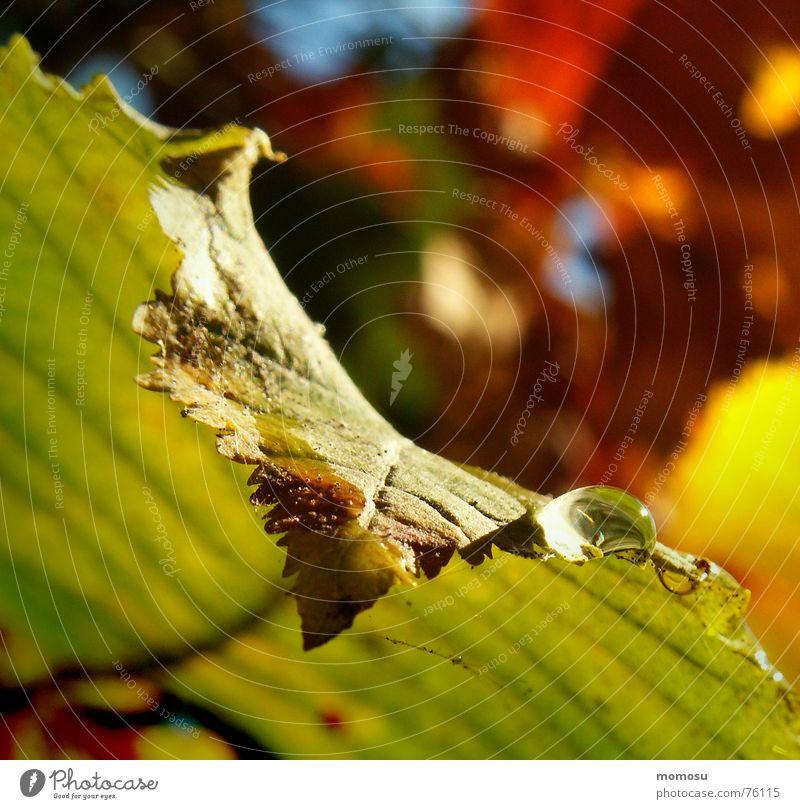 colours of nature Natur Blatt Farbe Herbst Wassertropfen Seil Färbung