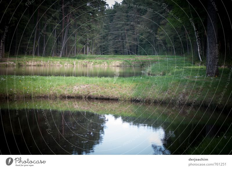 Karpfenweiher grün Wasser Baum Erholung ruhig Wald Umwelt Frühling Gras außergewöhnlich braun Deutschland Erde Zufriedenheit Ausflug Schönes Wetter