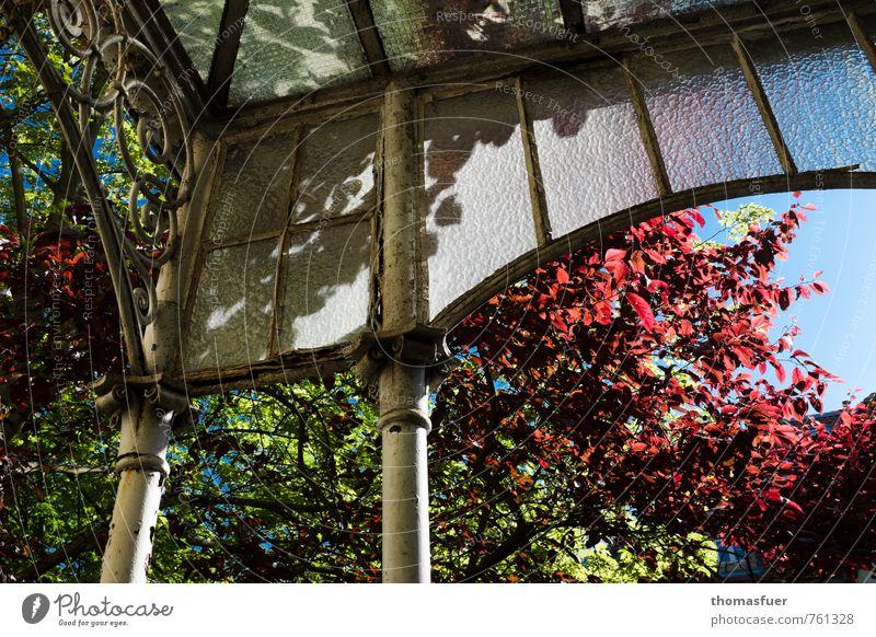 Bonn Stadt alt Pflanze Baum Haus Garten Metall Wohnung Park Häusliches Leben ästhetisch Sträucher Stadtzentrum Terrasse Altbau Frühlingsgefühle