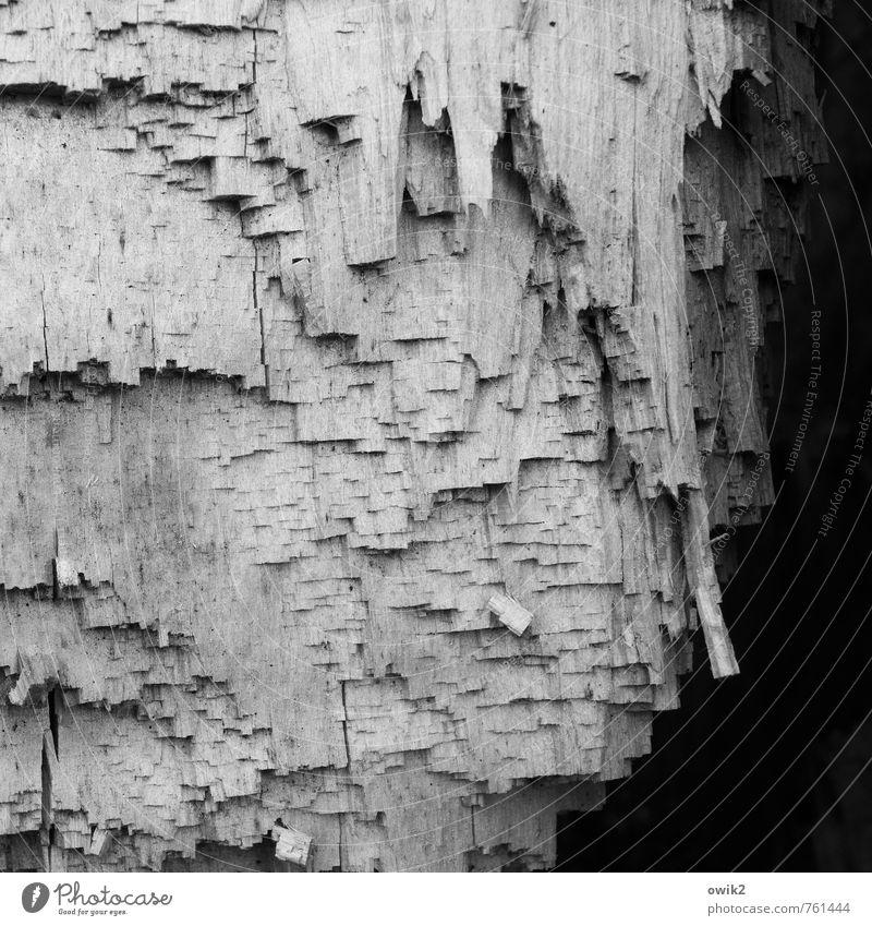 Holzschnitt Natur Pflanze natürlich Spitze Urelemente Baumstamm fest nah eckig