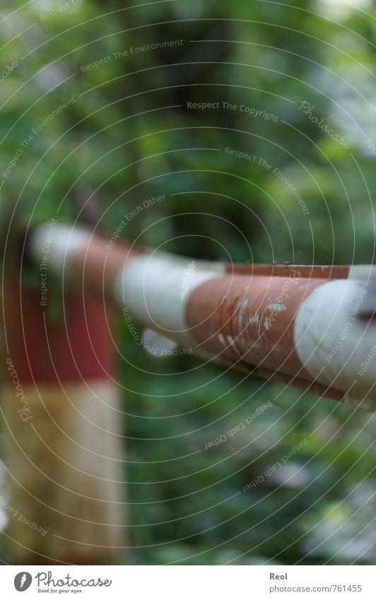 Hier gehts nicht weiter Natur Ferien & Urlaub & Reisen grün weiß Baum rot Tier dunkel Wald Umwelt Straße fliegen Fliege frei Urelemente Unendlichkeit