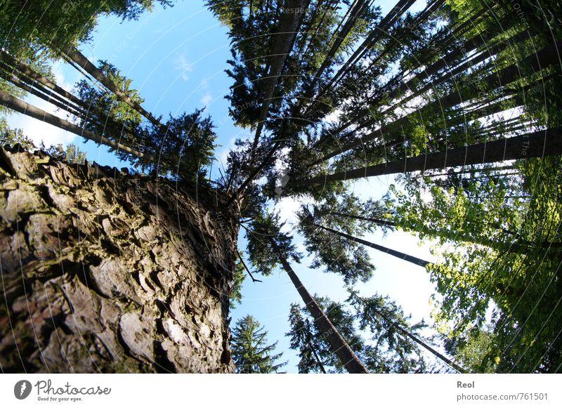 Eichhörnchenperspektive Umwelt Natur Landschaft Urelemente Erde Luft Sonnenlicht Frühling Sommer Wetter Schönes Wetter Baum Grünpflanze Wildpflanze Nadelwald