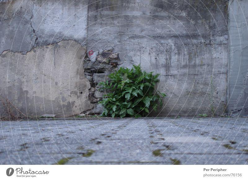 Grau-Grün Natur grün grau Mauer Kraft Beton Sträucher