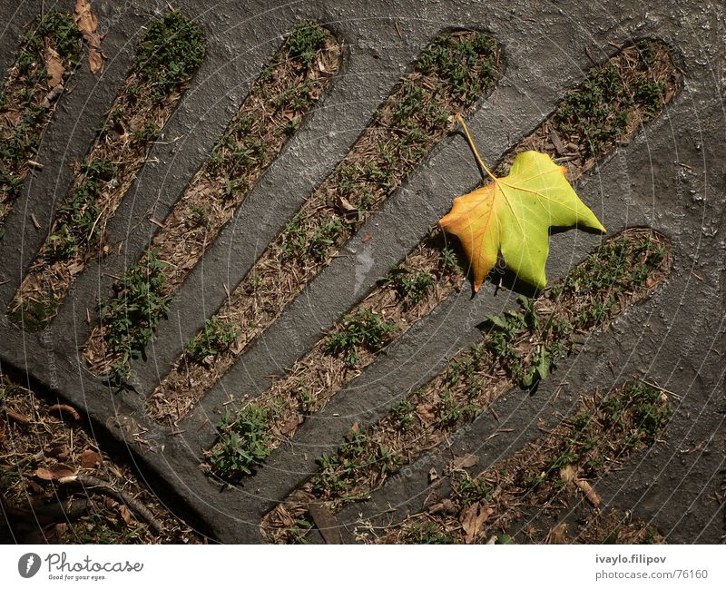 leaf gelb Holzmehl Park autumn fallen grating mood tree