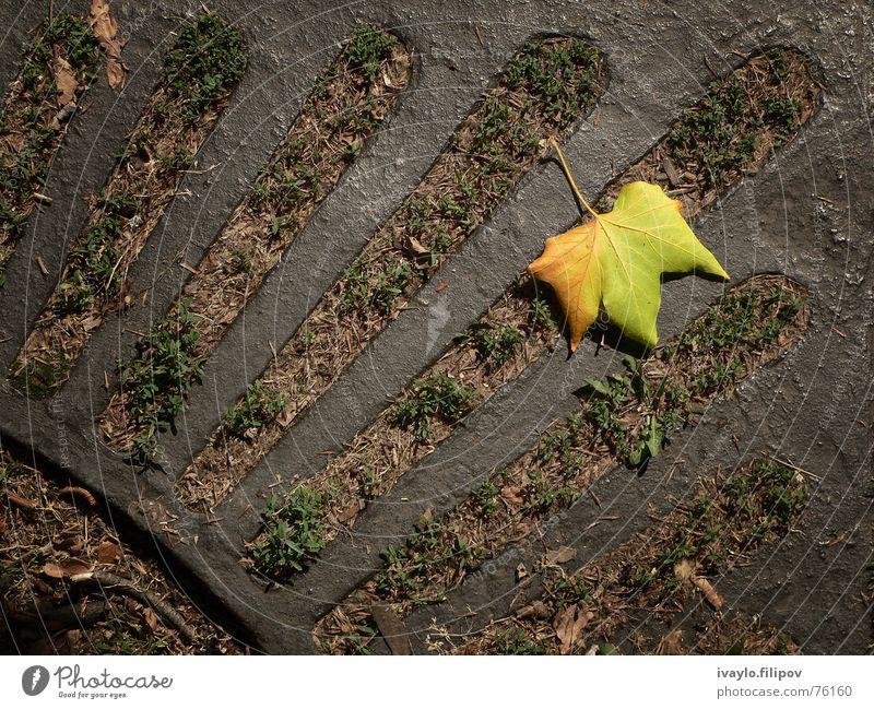 leaf gelb Park fallen Holzmehl