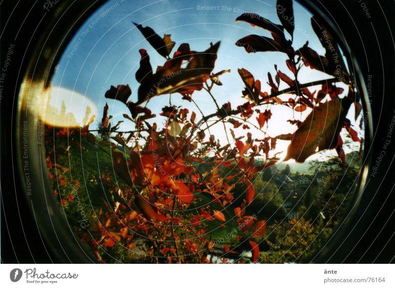 fischaugenherbst Himmel Sonne Pflanze rot Blatt Lampe Herbst Kreis rund Sträucher Vergänglichkeit Hügel blenden Verzerrung Stauden Lomografie