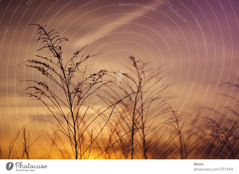 Abendrot Natur Pflanze ruhig Wiese Stimmung Feld Sträucher