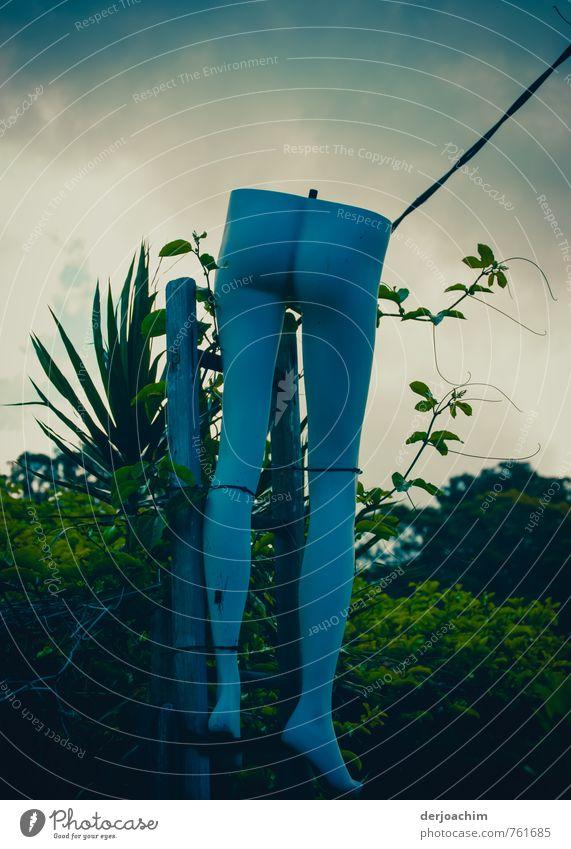 Erntedankfest in Australien. Blaue Beine mit Po in blau. im Garten aufgehängt Freude Sinnesorgane Freizeit & Hobby Sommerurlaub feminin Gesäß 1 Mensch