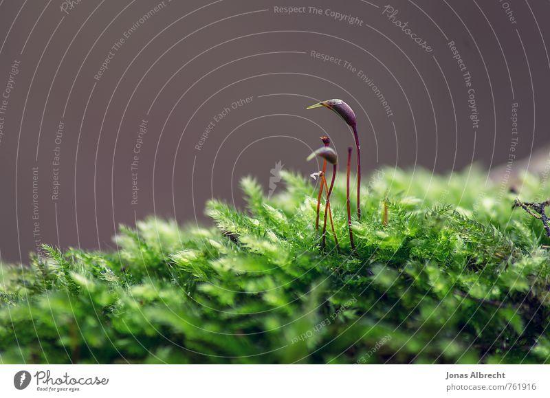 Zwei Umwelt Natur Pflanze Sonnenlicht Frühling Sommer Herbst Gras Moos Garten Park Wiese Wald Alpen Berge u. Gebirge braun gelb gold grau grün rot schwarz weiß