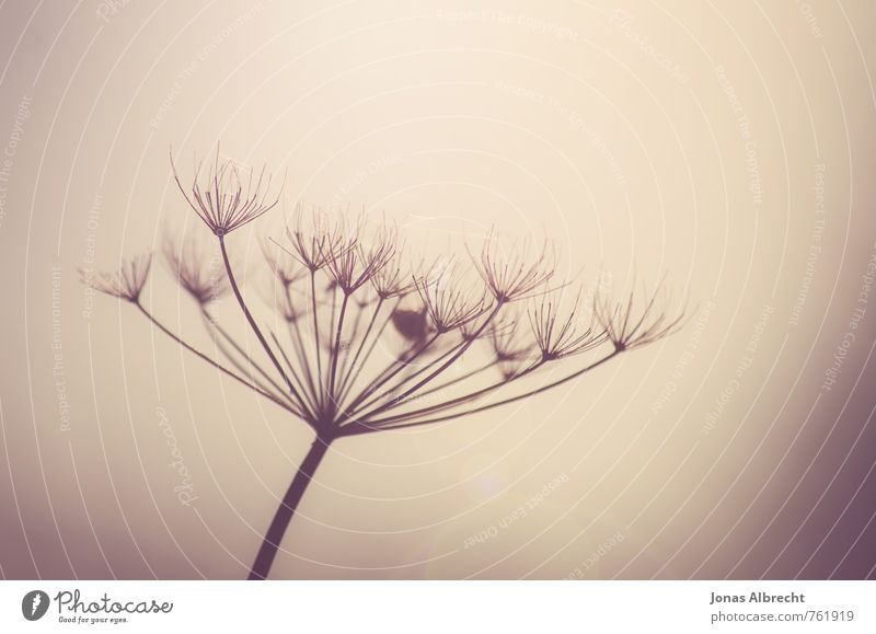 Fächer Umwelt Natur Pflanze Frühling Sommer Herbst Gras braun gelb gold violett orange rosa schwarz weiß Farbfoto Gedeckte Farben Außenaufnahme Nahaufnahme