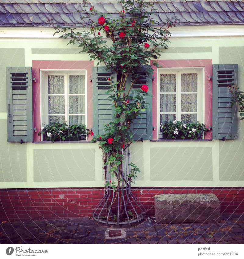Häusliche Ansichten V Wohnung Haus Sträucher Rose Grünpflanze Topfpflanze Rosenstock Mauer Wand Fassade Fenster Dach Fensterladen Stein Holz Wachstum alt