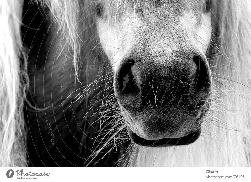 Zuckerschnutte Tier Haare & Frisuren Mund nass Nase Pferd Fell Schnauze Mähne Kolben