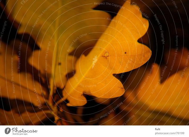 laub Blatt Eichenblatt ruhig gelb Strukturen & Formen Natur liegen Ende