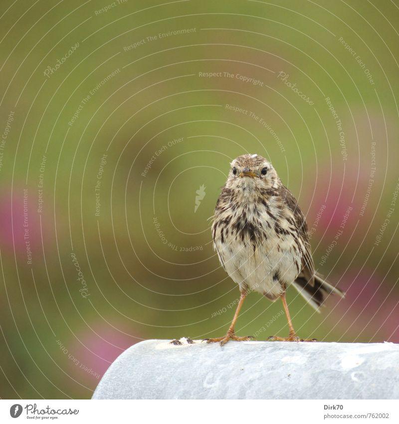 Überrascht. grün weiß Tier schwarz Leben klein braun Metall Vogel Angst Wildtier stehen beobachten niedlich Neugier violett
