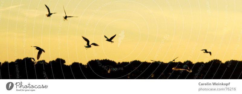 Flieg mit mir... Baum Einsamkeit Zusammensein Horizont fliegen Fluss Sehnsucht Möwe Flussufer Fernweh Elbe