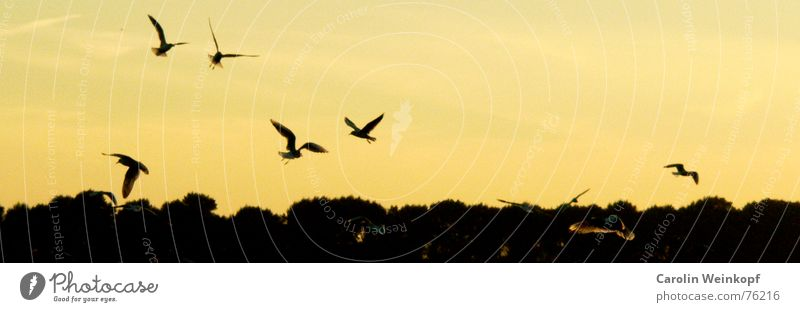Flieg mit mir... Möwe Horizont Baum Flussufer Sehnsucht Fernweh Zusammensein Einsamkeit Elbe fliegen fly linkslastig Abend