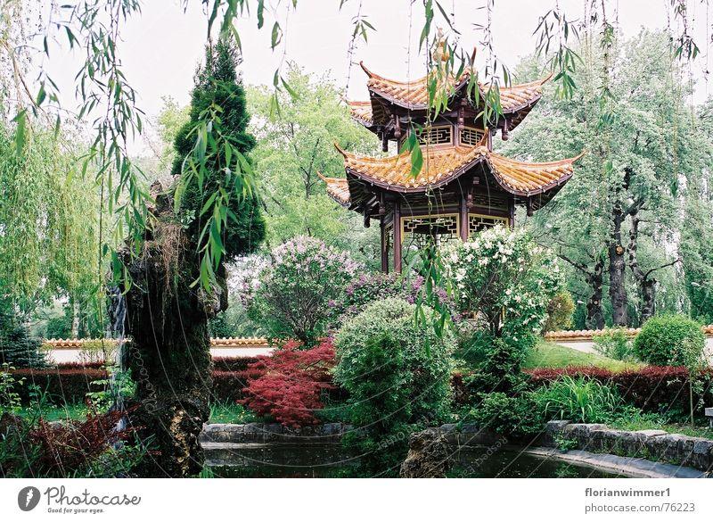 Chinesischer Garten Natur schön Pflanze ruhig Erholung Garten China