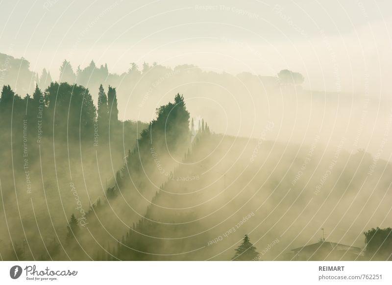 Toskana Landschaft Himmel Nebel Baum Wiese Feld Blick Glück Fröhlichkeit Zufriedenheit Warmherzigkeit Farbfoto Außenaufnahme Menschenleer Textfreiraum links