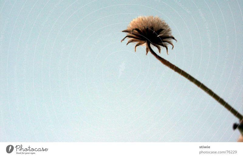 flower stretching Herbst Blüte Blume Stengel stalk stem Samen autumn seed blossom