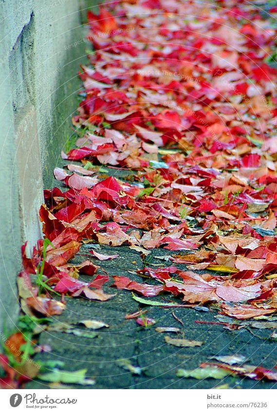 immer an der  Wand entlang !! Baum rot Blatt Haus Straße Graffiti Herbst Wege & Pfade Mauer Traurigkeit Kunst Stimmung Feste & Feiern Regen Wind