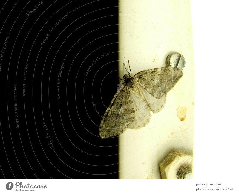 Nachts kommen Sie raus... Schmetterling Insekt Lampe Schraube dunkel Tier Muster schwarz weiß Schädlinge Ekel zart sensibel Flügel Angst