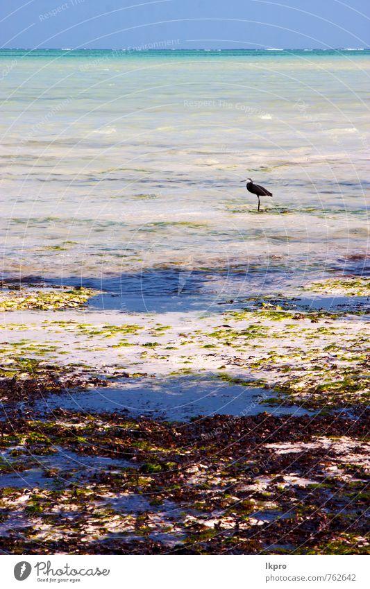 Natur Ferien & Urlaub & Reisen schön Sommer Meer Erholung Wolken Tier Küste Freiheit Vogel Sand hell wild dreckig Wellen