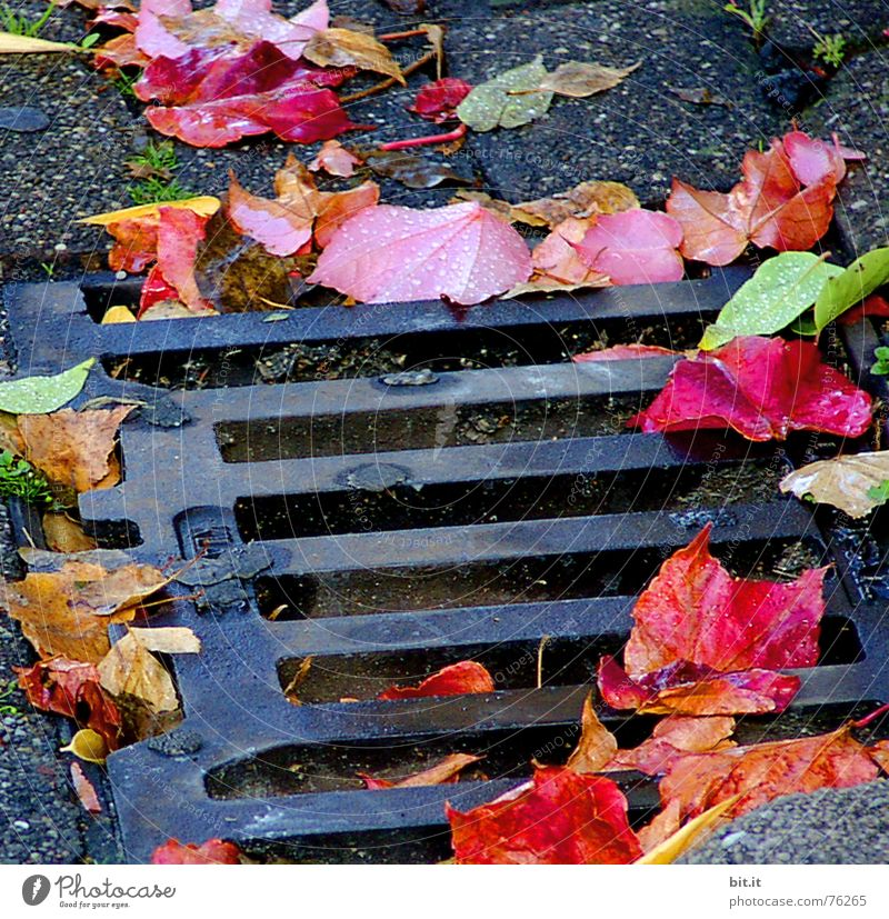 wie tief kann man eigentlich noch fallen ?? Abwasser abwärts Gully Herbst Blatt Stimmung Drehung Baum Kopfsteinpflaster mehrfarbig Oktober November Eindruck