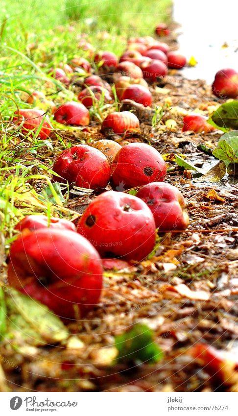 Bald Matsch Straßenrand Herbst Zeit Jahreszeiten Vergänglichkeit verfaulen Wurm Gras Blatt nass feucht kalt rot grün Schlamm Asphalt Wiese Ernährung