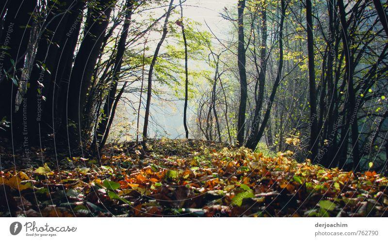 Herbstfarben Natur Ferien & Urlaub & Reisen schön grün Baum Erholung Blatt schwarz Wald gelb Herbst Holz Glück außergewöhnlich Deutschland Zufriedenheit
