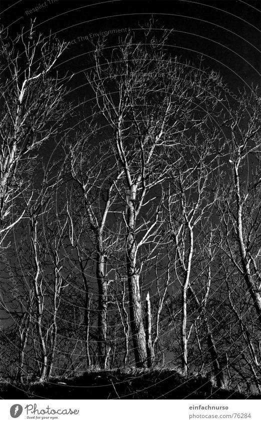 o.t. Baum Außenaufnahme dunkel Winter Schwarzweißfoto Natur verzweigt Irritation