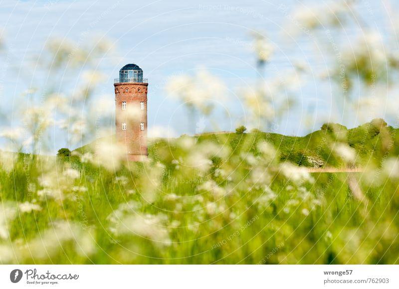 Volle Peilung Himmel alt Pflanze Sommer Wiese Feld Turm Wolkenloser Himmel Bauwerk Denkmal Rügen Blauer Himmel Wildpflanze Atelier Aussichtsturm Pflanzenteile