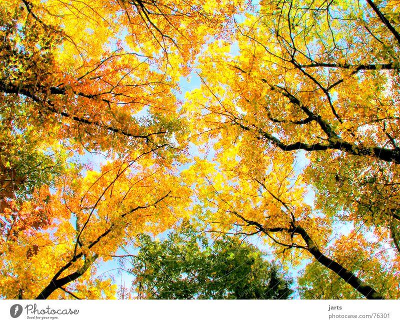 Bunter Himmel Herbstwald Herbstlaub Blatt Baum Wald mehrfarbig groß Natur Farbe jarts
