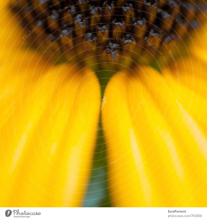 schwarzgelb Umwelt Natur Pflanze Frühling Sommer Blume Blüte Garten Park Wiese Linie ästhetisch natürlich Blütenblatt Blütenstempel Blütenkelch leuchten