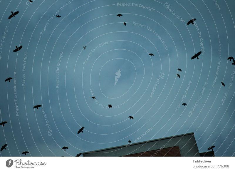 Luft-Raum II Himmel Winter Haus Wolken Herbst Vogel Schwarm Zugvogel